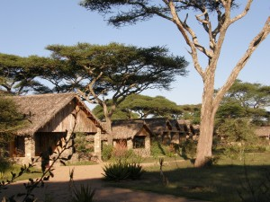 Tansania – Ndutu Safari Lodge