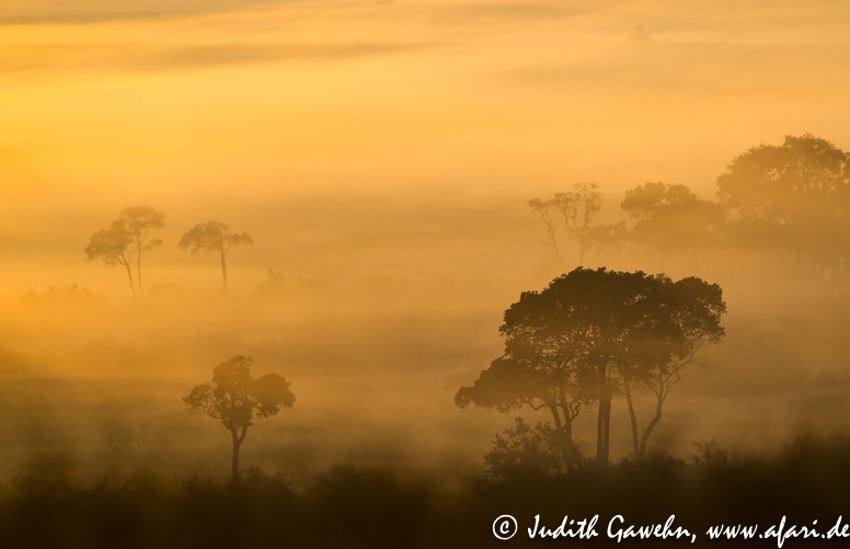 Sonnenaufgang in der Massai Mara, Sunrise in the Massai Mara,Afari Fotoreise nach Kenia, Canon EOS- 1 D Mark IV, EF 600 mm, f/ 4.0L IS II USM, ISO 400, 1 / !600 Sek, bei f/ 4.0