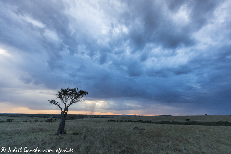 Sturm in der Massai Mara, Kenia, CanonEOS 1 DX, EF 16-35mm f/2,8 L II USM , 16 mm